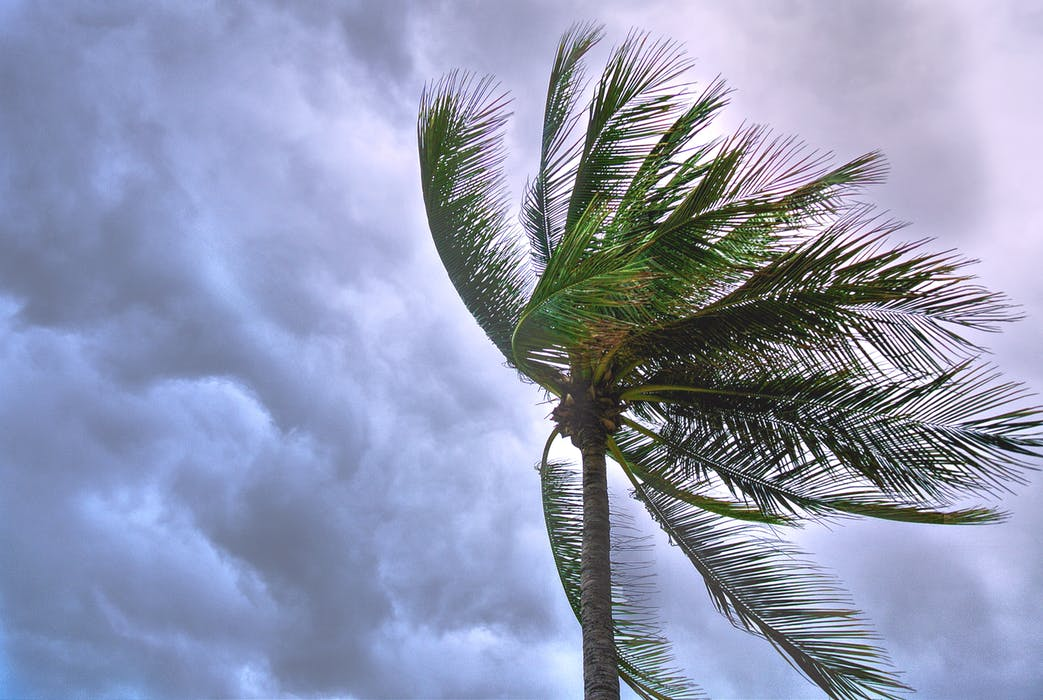 陸上 台風 試合