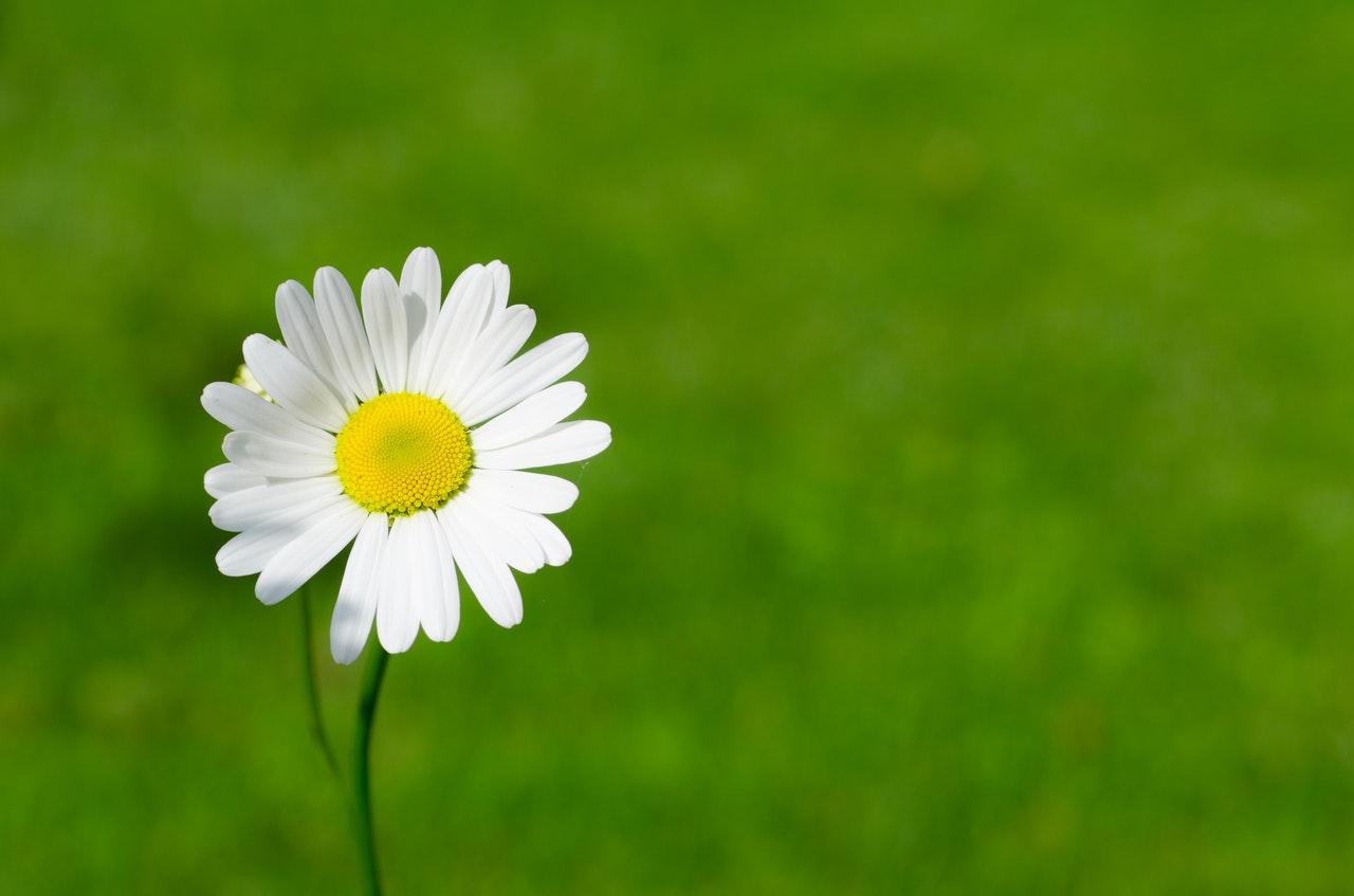 花粉症の割合は約30%!?予防・改善に効果のある食べ物を徹底解説!